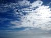 bird in sky