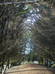 cypress hollow