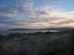bodega bay beach