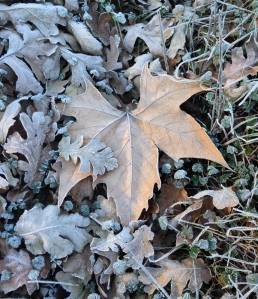 winter leaf pilot hill_edited-1