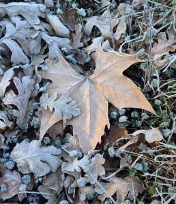 winter leaf pilot hill_edited-1