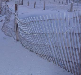Jersey shore dunes
