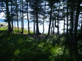 through the trees, Fogo Island
