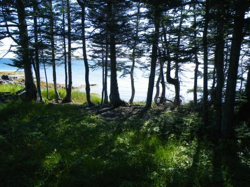 through the trees, Fogo Island